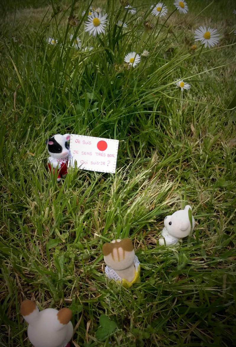 chasse au trésor dans la prairie fleurie 3