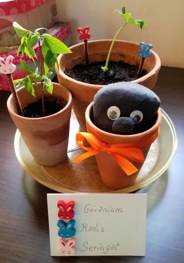 Mini jardin 12