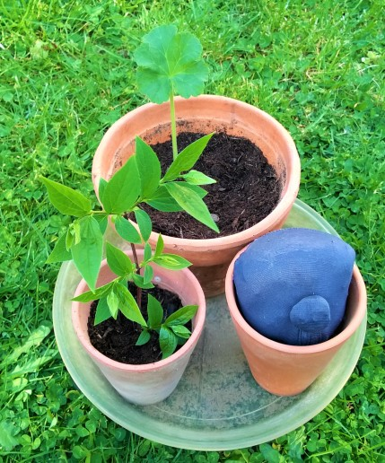Mini jardin 9